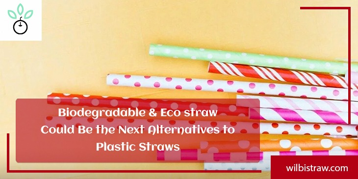 Biodegradable & Eco Straws