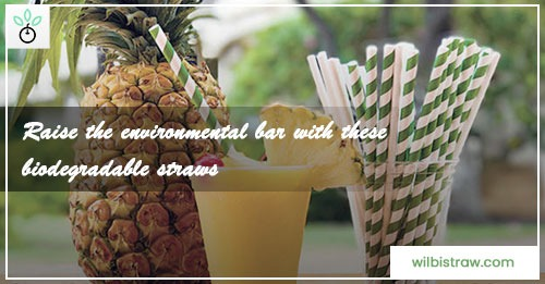 Raise The Environmental Bar With These Biodegradable Straws